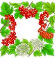 guelder rose frame on white background vector image vector image
