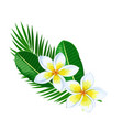 plumeria summer tropical flower vector image
