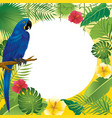 blue macaw and tropical plants vector image vector image