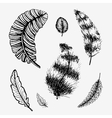 Hand drawn feathers set vector image