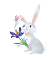 vector grey hare with flower vector image