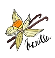 Hand drawn Vanilla flower and sticks vector image