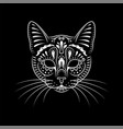 decorative cat portrait on black with whiskers vector image vector image