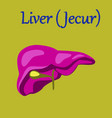 human organ icon in flat style liver vector image
