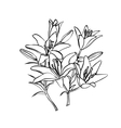Lily sketch on white background vector image vector image
