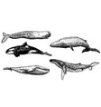 ink hand drawn whale icon set vector image