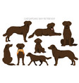 chesapeake bay retriever clipart different poses