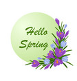 inscription hello spring with bouquet of crocuses vector image