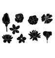 Set flowers vector image vector image
