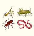big set of insects vintage pets in house mantis vector image vector image