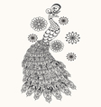Hand drawn Peacock for vector image vector image