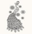 hand drawn peacock vector image vector image