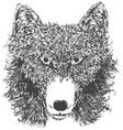 Wild wolf head vector image