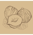 Hazelnut isolated on vintage background vector image