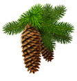 a branch of fir with two cones high detailed vector image vector image