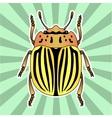 Insect anatomy Sticker colorado potato beetle vector image vector image