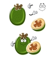 Cartoon tropical feijoa or pineapple guava fruit vector image vector image