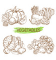hand sketched vegetables isolated on white vector image vector image
