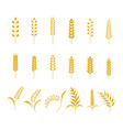 set simple wheats ears icons and grain design vector image