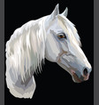 colored horse portrait-6 vector image vector image