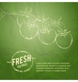 Culinary cover background vector image vector image