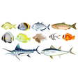 Different fishes vector image vector image