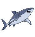 Drawing of a great white shark isolated object vector image