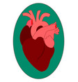 human heart on white background vector image vector image