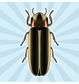 Insect anatomy Sticker Firefly beetle Lampyridae vector image