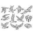 birds of prey sketches eagle falcon and hawk vector image