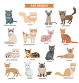Cat breed set vector image