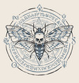 banner with hand-drawn moth and magical symbols vector image vector image