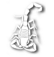 cutout scorpion design vector image vector image