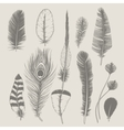 Feathers collection Vintage design set Hand vector image vector image