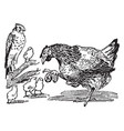 mother hen with baby chicks vintage