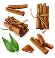 realistic cinnamon sticks set vector image