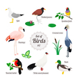 Set of birds vector image vector image