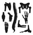 orthopedic medicine human bones and joints vector image vector image