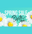 spring sale banner background with daisy flowers vector image
