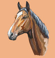 colorful horse portrait-1 vector image