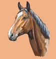colorful horse portrait-1 vector image vector image
