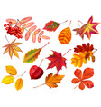 color autumn leaves fallen leaves colored dry vector image vector image