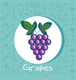 grapes fresh fruit poster with healthy food vector image