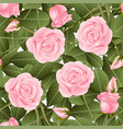 pink rose and green leaves on white background vector image