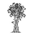 binded pine tree sketch engraving vector image