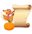 Cartoon turkey with vintage scroll paper isolated vector image vector image