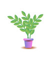 a plant in pot isolated on white vector image vector image