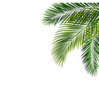 border with palm leaf isolated vector image vector image