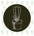 cactus in pot hand drawn round icon vector image vector image