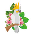 parrot tropical bird icon vector image vector image